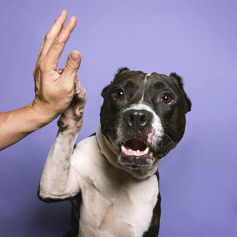Sophie Gamand Pit Bull Flower Power, high five,