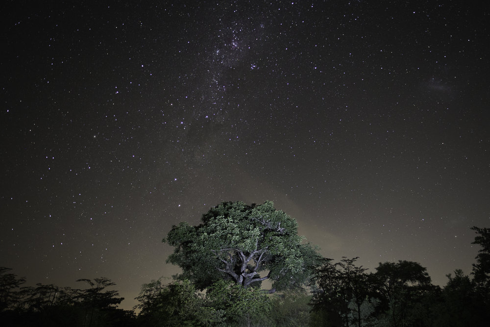 Sky and night in the forest